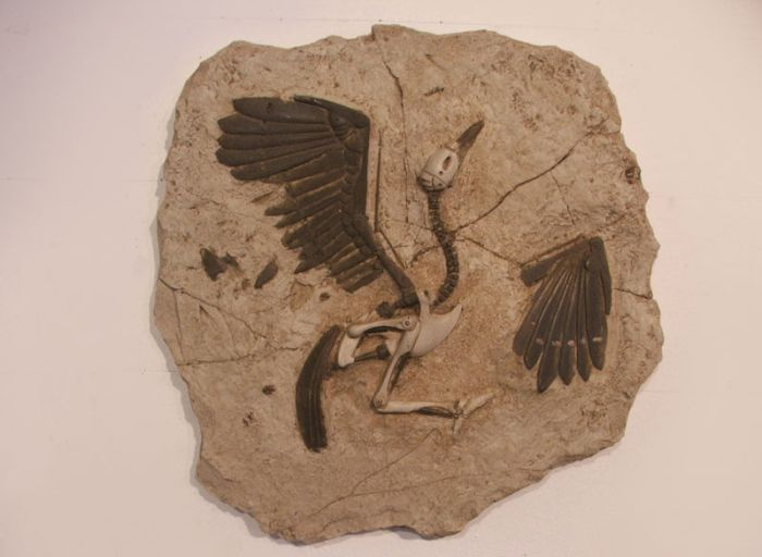 Duringexcavations6