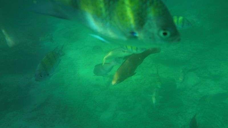 klares Wasser und Fische an der Monkey Bay
